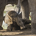 Safest Baby In Africa  by Gene Myers