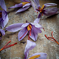 Saffron Flower by Nitin Kapoor