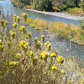 Sage Along The River by LKB Art and Photography