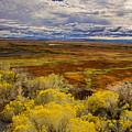 Sagebrush Country by Kunal Mehra