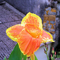 Saging Saging Tropical Flower Philippines by Kathy Daxon