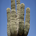 Saguaro 2 by Kelley King