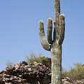 Saguaro 3 by Kelley King