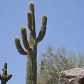 Saguaro 6 by Kelley King