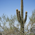Saguaro 8 by Kelley King