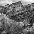 Saguaro And Mountains At Saguaro Lake by Dave Dilli