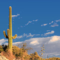 Saguaro Cactus - Symbol Of The American West by Christine Till