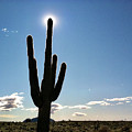 Saguaro Cactus Silhouette With Sunburst  by Bryan Mullennix