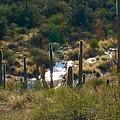 Saguaro Creek by Marie Webb