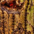 Saguaro Detail No. 18 by Roger Passman