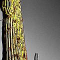 Saguaro Gestures by Jerry Kalman