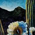 Saguaro In Bloom by Frances Marino