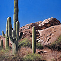 Saguaro National Monument by Joe Roselle