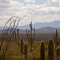 Saguaro National Park Az by Susanne Van Hulst