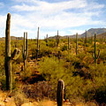 Saguaro National Park by Kurt Van Wagner