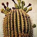 Saguaro by Sandra Selle Rodriguez