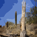 Saguaro Skeleton by Kelley King