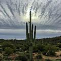 Saguaro Sun Break Clouds by Katie Brown