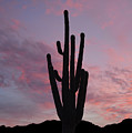 Saguaro Sunset  by Aimee L Maher ALM GALLERY