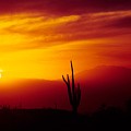 Saguaro Sunset by Randy Oberg