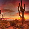 Saguaro Sunset by Susan Rissi Tregoning