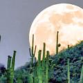 Saguaro Super Moon by Dr Bob Johnston