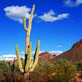Saguaro Tree by Susanne Van Hulst