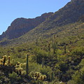 Saguaros And Other Greenery  by Teresa Stallings