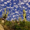 Saguaros Under A Cloud Dappled Sky by Jeff Swan