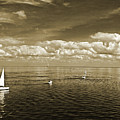Sail Boats 1 by Michael L McKinley