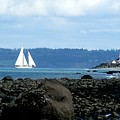 Sailboat And Lighthouse by Barbara Henry