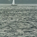 Sailboat And Waves, Piscataqua River, Maine 2004 by Frank Romeo