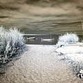 Sailboat Entry Infrared Brown by John Rizzuto