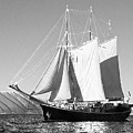Sailboat - Id 16235-142735-0101 by S Lurk