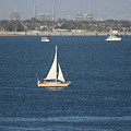 Sailboat On The Pacific In Long Beach by Colleen Cornelius