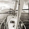 Sailboat Sailing Past Arthur Ravenel Jr Bridge Charleston Sc by Dustin K Ryan
