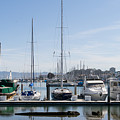 Sailboats At St Francis Yacht Club Harbor San Francisco California Dsc3094 by Wingsdomain Art and Photography