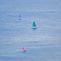 Sailboats by Carol  Eliassen