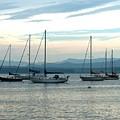 Sailboats Docked by Rita Tortorelli