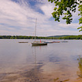 Sailboats by Tom Heeter