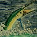 Sailfish by Spencer  Joyner