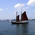 Sailing Boston by Jasmin Hrnjic