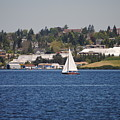 Sailing On Lake Union by Donna Meadows