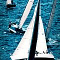Sailing Regatta by Sandy Buckley