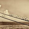 Sailors V2 by Douglas Barnard