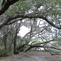 Saint Andrews Park Florida by B L Qualls