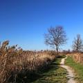 Saint Johns Marsh In Fall 3 by Mary Bedy