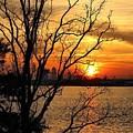 Saint Johns River Sunset  by Geoffrey Shaffer