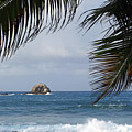 Saint Lucia Palm Tree Small Rock Caribbean Flowing by Toby McGuire