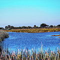 Saint Marks National Wildlife Refuge Lagoon by Bill And Deb Hayes